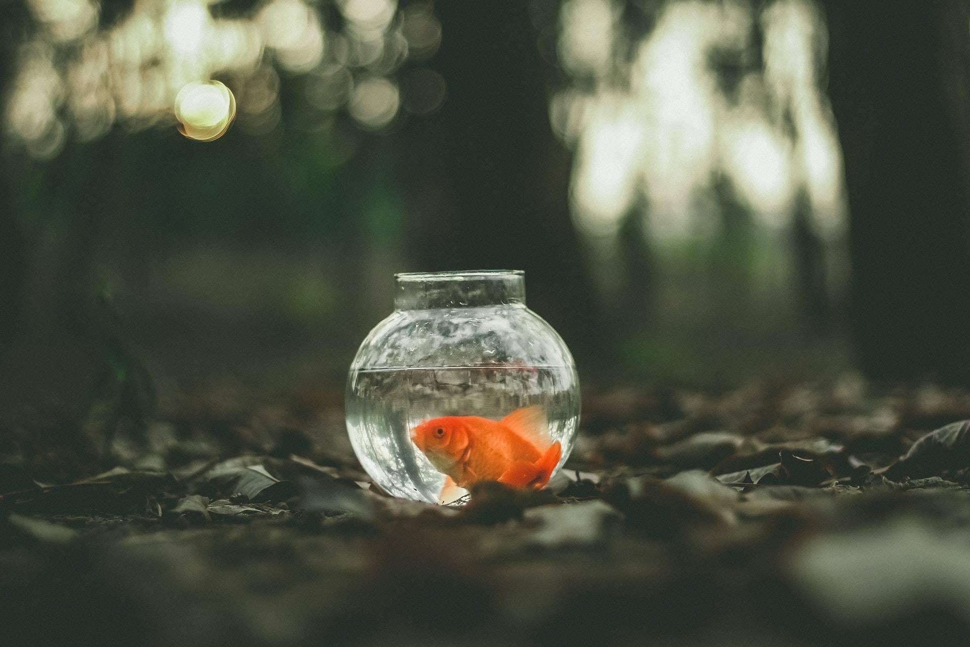 Метод Золотой рыбки: ТРИЗ в бизнесе